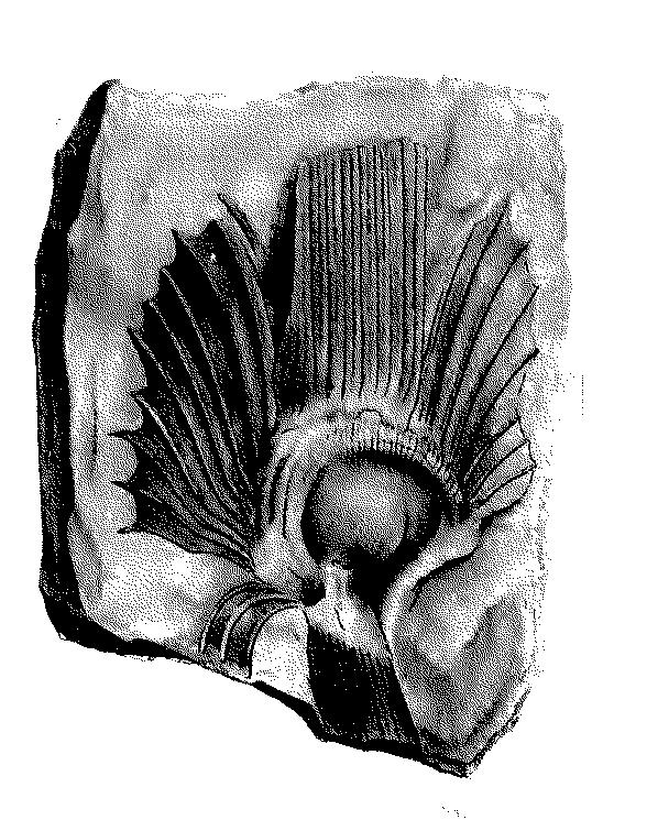 paleontologie2_caro_m