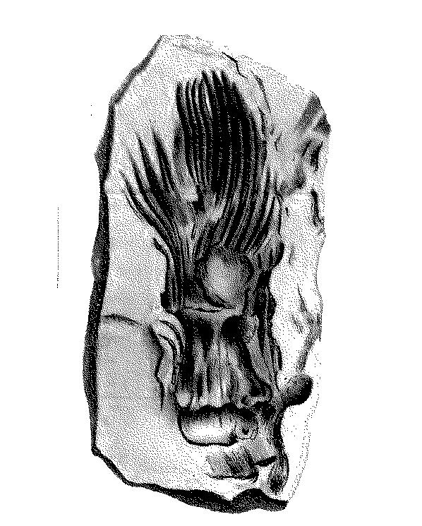 paleontologie3_caro_m
