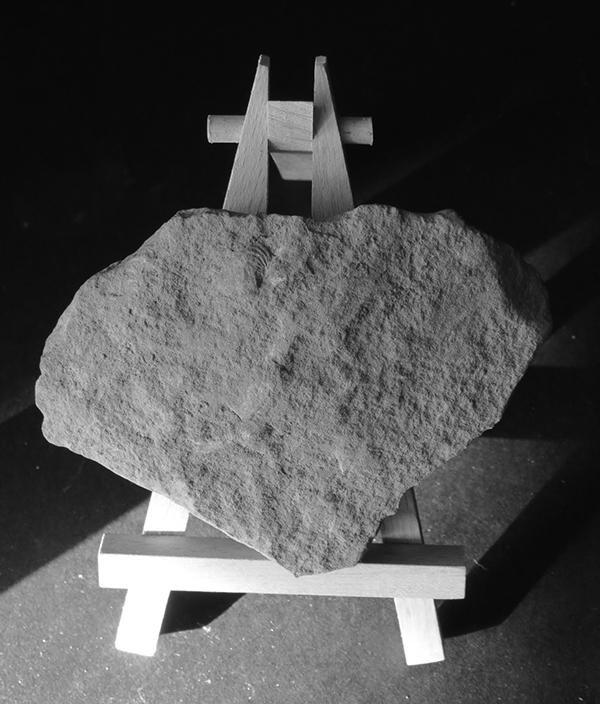shell of limestone 009_