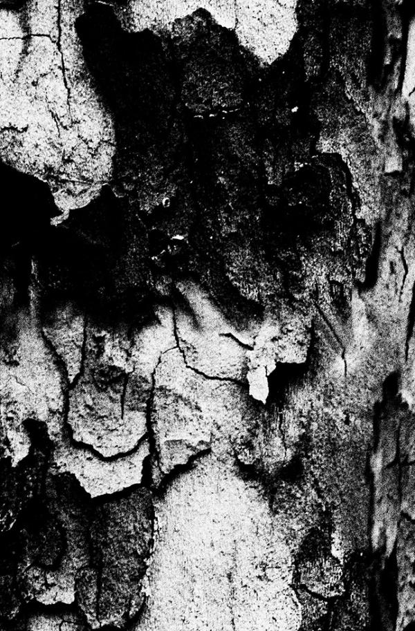 hold_to_trees_12_caro_m