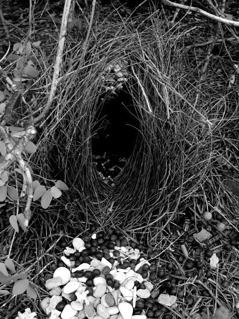 02.Broome-bower-2 grey